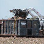 Der Vorteil des Containerdienstes – Müll entsorgen